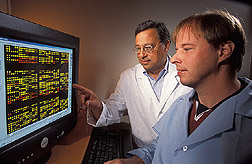 Research leader and microbiologist examine an onscreen image: Click here for full photo caption.
