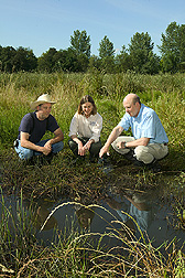 Farmer, fish biologist, and agronomist look at native wetland plants: Click here for full photo caption.