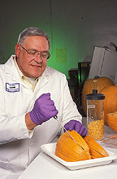 Biologist prepares pumpkin for freeze-drying: Click here for full photo caption.