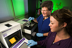 Paula Fedorka-Cray and Lori Ayers perform antimicrobial susceptibility testing on a plate of bacterial cultures. Link to photo information