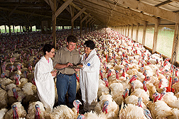 Molecular microbiologists discuss modern turkey-production practices with farm co-owner: Click here for full photo caption.
