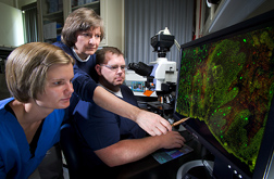 Microbiologist (center) indicates to technicians the fluorescent-stained lymphocytes in rectal tissues obtained from a calf experimentally infected with E. coli O157:H7 bacteria: Click here for full photo caption.