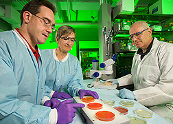 From left, microbiologist, postdoctoral research associate, and chemist examine colonies of Listeria monocytogenes captured with immunomagnetic beads coated with single-chain antibodies specific for the pathogen: Click here for full photo caption.