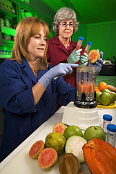Technician (left) and horticulturist homogenize guava for antioxidant and pigment analyses: Click here for full photo caption.