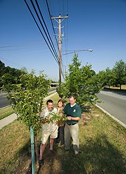 Geneticist (right), horticulturist, and Greenbelt, Maryland, director of public works evaluate a Malus crabapple tree: Click here for full photo caption.