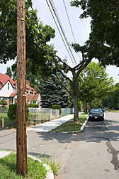 In the fight between tree and power line, the victor is often the power lines, with trees needing heavy pruning that can lead to unstable, unsafe branches: Click here for photo caption.