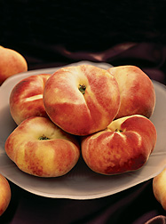 The ARS germplasm repository at Davis, California, contains many peach specimens, such as Galaxy (shown here), developed by ARS breeders in Parlier, California: Click here for photo caption.