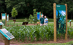 Corn growing in the Power Plants exhibit at the U.S. National Arboretum: Click here for full photo caption.