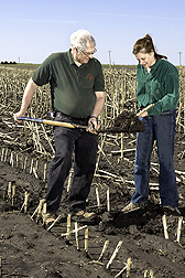 Photo: ARS soil scientist Doug Karlen and technician Tanya Ferguson examine soil samples in a field of cornstalk residues. Link to photo information