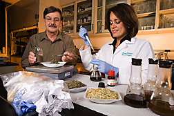 For ethanol research, technician weighs pulp recovered from garbage while microbiologist adds glucose-releasing enzymes to a blend of plant material and pulp suspended in water: Click here for full photo caption.