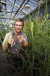 Photo: ARS molecular biologist Christian Tobias samples switchgrass plants. Link to photo information