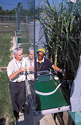 Crop models are developed from years of computer monitoring of crops grown in hard-wired outdoor growth chambers and from years of field trials on farms around the country: Click here for full photo caption.