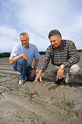 Geneticist (left) and agronomist inspect transplanted sugarcane seedlings: Click here for full photo caption.