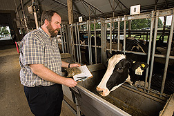 Geneticist obtains a feed sample for a study of feed efficiency in a Beltsville dairy herd: Click here for full photo caption.