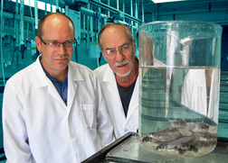Molecular biologist (left) and microbiologist demonstrate a technique where channel catfish are immersed in water containing the modified live Streptococcusiniae vaccine: Click here for full photo caption.