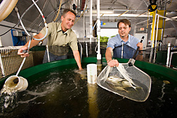 Photo: ARS scientists like agricultural engineer Timothy Pfeiffer (left) and ARS technician Todd Lenger have developed water recirculating systems that can increase fish production of warm-water marine fish like pompano. Link to photo information.