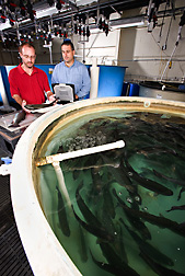 Photo: Two researchers examine a tank of trout. Link to photo information