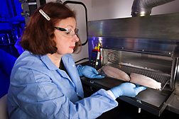 Food microbiologist places a frozen catfish fillet into a device for surface decontamination by pulse UV treatment: Click here for full photo caption.