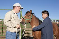 Técnico James Allison (izquierda) y médico veterinario oficial Massaro Ueti colectan una muestra de sangre de un caballo infectado con Theileria equi. Enlace a la información en inglés sobre la foto