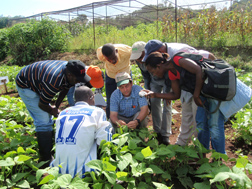 At the Instituto de Investigacao Agronomica in Angola, Africa, ARS geneticist Timothy Porch (center) shows a group of technical staff and students how to hybridize common bean for improvement of resistance to common bacterial blight and angular leaf spot: Click here for photo caption.