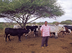Lehotlo Ephraim Matjuda, senior manager of Animal Breeding and Improvement for the Agricultural Research Council's Animal Improvement Institute, with cattle from his farm in Limpopo Province, South Africa: Click here for full photo caption.
