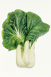 Bok choy--another sample of the tremendous variety of specimens in the Germplasm Resources Information Network (GRIN): Click here for photo caption.