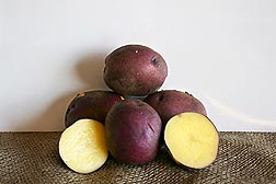 Photo: Peter Wilcox potatoes with yellow flesh and purple skin. Link to photo information