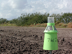 A boll weevil trap baited with an experimental formulation of pheromone: Click here for full photo caption.