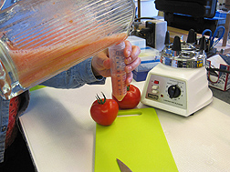 Homogenized tomato fruit sample used for measuring acids, sugars, and vitamin C at the ARS Plant Genetics Resources Unit in Geneva, New York: Click here for full photo caption.