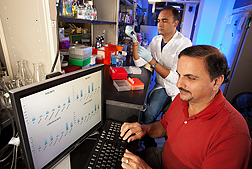 Autar Mattoo (foreground) and postdoctoral fellow Rakesh Upadhyay are studying plant genes involved in metabolic pathways related to growth and longevity: Click here for full photo caption.