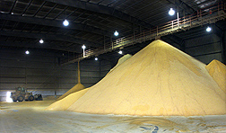 Tons of dried distiller's grains stored at the Big River Resources ethanol facility in West Burlington, Iowa: Click here for full photo caption.