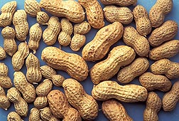 People tend to eat peanuts that have been roasted or boiled, while the extracts commonly used to diagnose peanut allergies are from raw nuts: Click here for full photo caption.