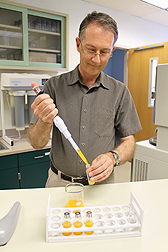 Plant physiologist David Obenland adds mandarin juice to a vial for analysis of aroma volatiles.