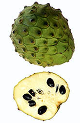 Mountain soursop. Click here for full photo caption.