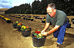 Technician Tom Treat examines dahlias for evidence of damage