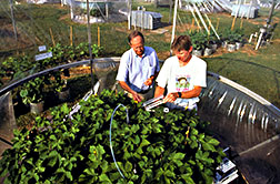 Scientists measure cotton plants' photosynthesis and gas uptake through leaf pores with a portable infrared gas analyzer.