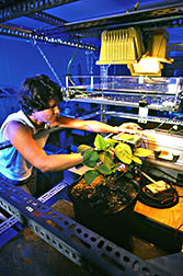 NCSU research associate Chantal Reid performs laboratory photosynthesis on soybean plants.