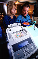 Photo: Microbiologist Judith Stabel and research associate Jay Ellingson examine an autoradiograph of a Mycobacterium paratuberculosis-specific gene cloned at the National Animal Disease Center. Link to photo information
