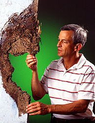 Microbiologist Alan Lax examines termite nest.