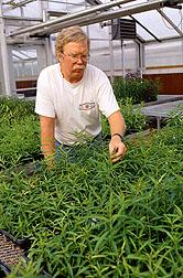 Horticulturist Tom Beckman