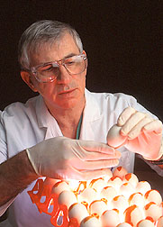 Veterinarian Dr. King inspects embryonated chicken eggs before inoculation.