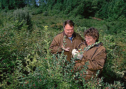 An animal scientist and a chemist label invasive shrubs for later assessment of the nutritive value.