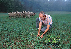 Geneticist Paul Voigt collects a wild white clover plant from a sheep-grazing pasture.