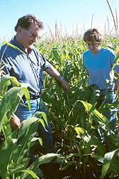 Soil scientist Alan Olness and chemist Jana Rinke inspect corn plants in a tillage/nitrate study.