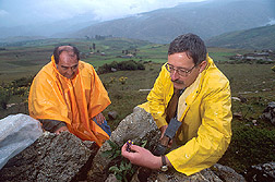 David Spooner and Alberto Salas collect potato germplasm in a mountainous area of Peru. Link to photo information