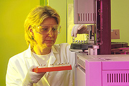Technician uses gas chromatography to identify bacteria isolated from apple roots. Click here for full photo caption.