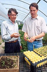 Horticulturist and technician examine seedlings of woody ornamentals that will be included in woody ornamental trials. Click here for full photo caption.