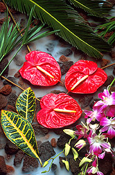 Tropical flowers like these orchids and anthuriums bring premium prices at nurseries and floral shops around the world. Click here for full photo caption.