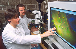 Research associate and plant pathologist watching fungus on a monitor: Click here for full photo caption.