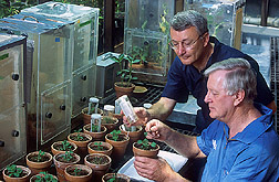 Two scientists examine aphids: Click here for full photo caption.